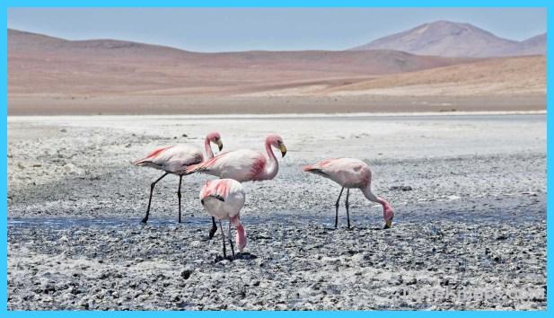 Travel to Bolivia_15.jpg