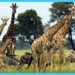 Travel to Botswana_16.jpg