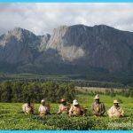 Travel to Malawi_8.jpg