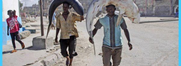 Travel to Somalia_5.jpg