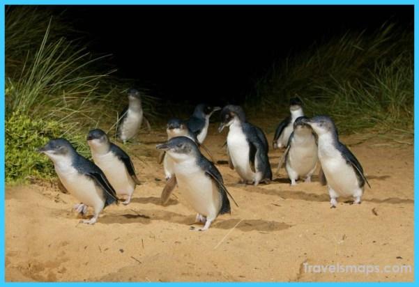 Penguin-2-700x476.jpg