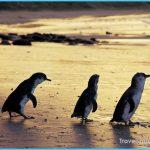 penguins-phillip-island-nature-park_pi_r_1052997_1150x863.jpg?ts=20150828450239&cp=95&w=720&h=540&crop=1