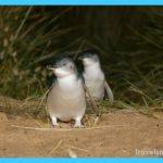 phillip-island-penguin-brighton-beach-moonlit-sanctuary-from-melbourne-in-melbourne-117324.jpg