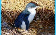 phillip-island-penguin-parade-evening-tour-in-melbourne-41827.jpg