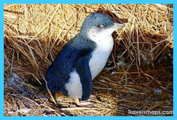 phillip-island-penguin-parade-evening-tour-in-melbourne-41827.jpg