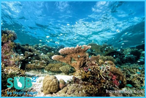 reef-top-3792-medium.jpg