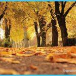 trees-1789120_1920.jpg?itok=_5ARO6Gi