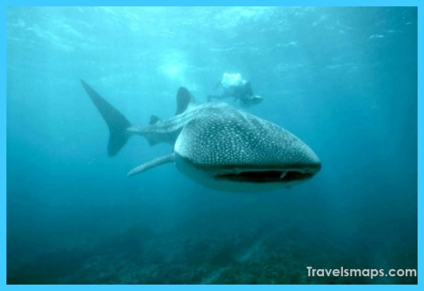 Shocking Things in Australia that Fascinate the Travellers_16.jpg