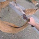 do deer like cheetos nara japan 06