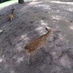 do deer like cheetos nara japan 14