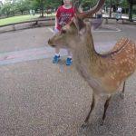 do deer like cheetos nara japan 17