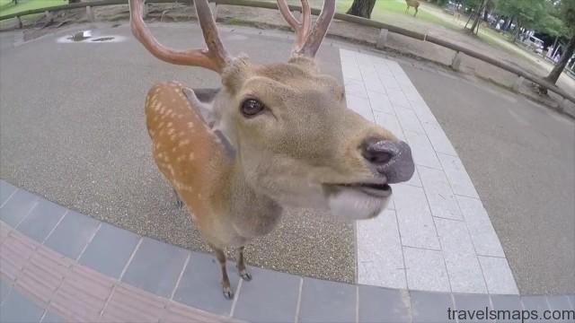 do deer like cheetos nara japan 21