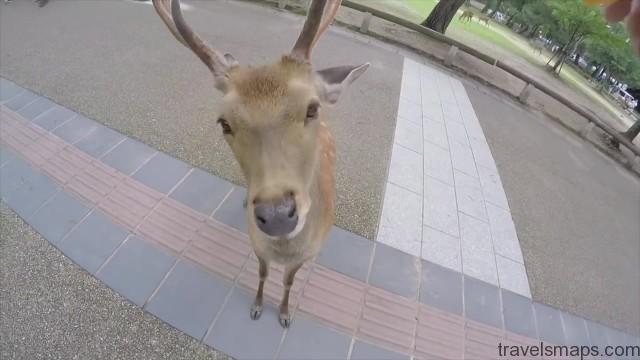 do deer like cheetos nara japan 22