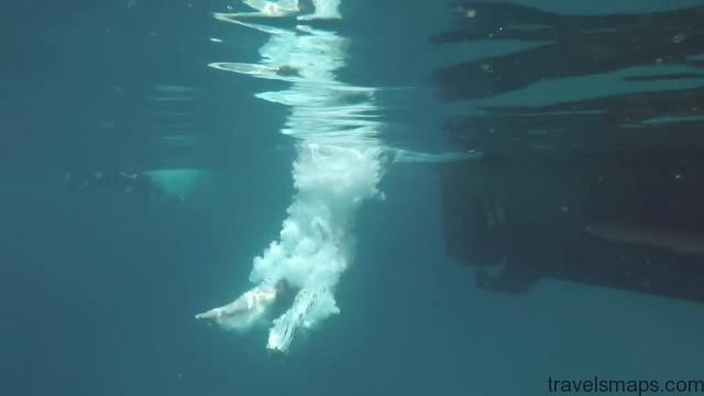 koh tao boat tour tropical freediving 15