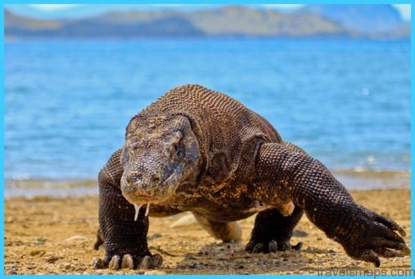 LOST IN FLORES – LAND OF THE KOMODO DRAGONS