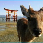 Miyajima Island_31.jpg