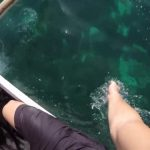 swimming with the worlds largest fish whale sharks in oslob 26