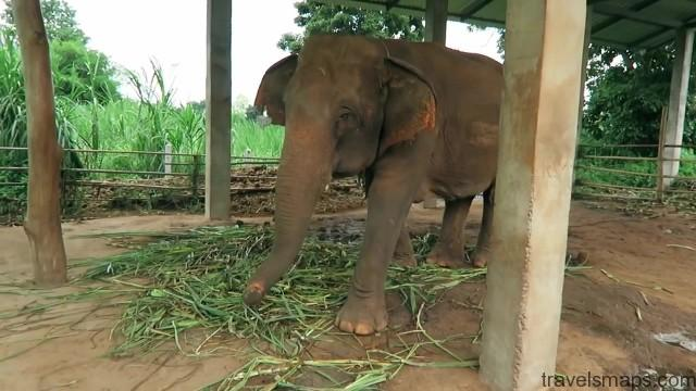 thailands dirty secret the elephants of thailand 92