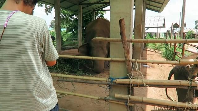 thailands dirty secret the elephants of thailand 93