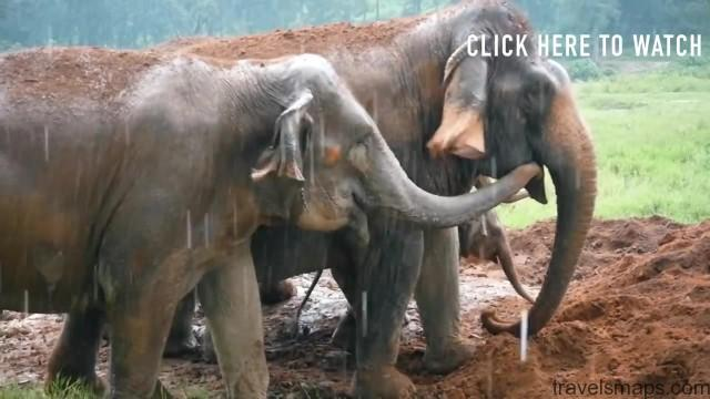 thailands dirty secret the elephants of thailand 99