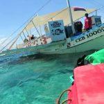 white tip sharks in malapascua 08