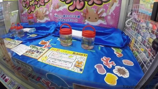 win a fish at the japanese arcade 14