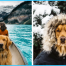 Travel With Dogs_29.jpg