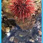 Lands: Palos Verdes Nature Preserve - Abalone Cove Reserve   Palos ...