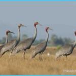 Birds of Cambodia_0.jpg
