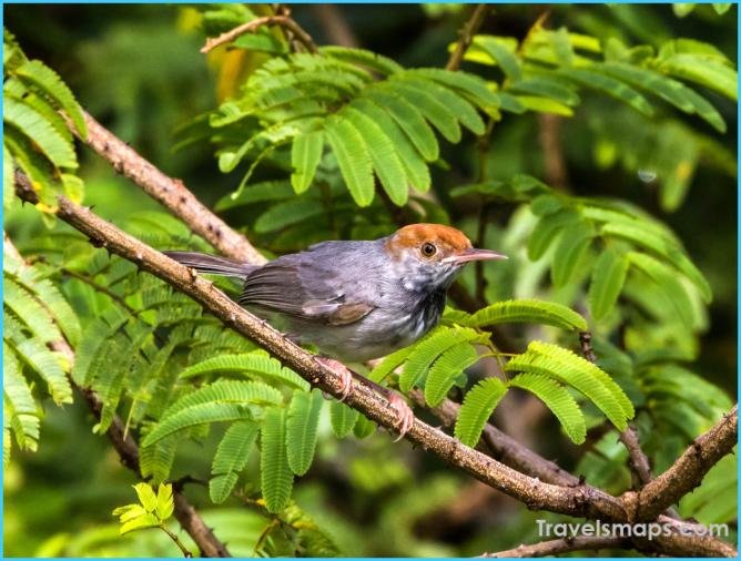 Birds of Cambodia_4.jpg