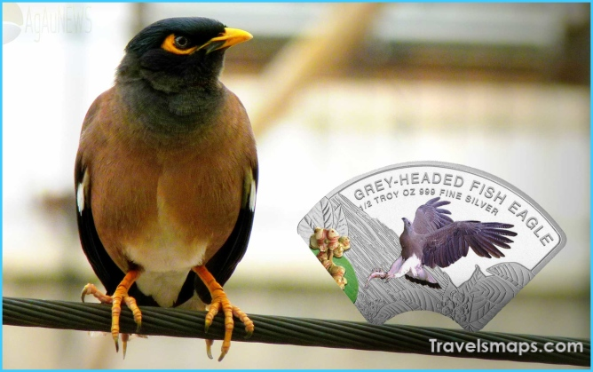 Birds of Cambodia_6.jpg