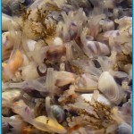 Coquina Clam-boree | There were hundreds of these around