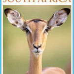 Travel To South Africa - South Africa Travel Guide_8.jpg